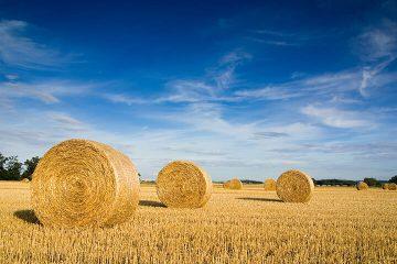Artykuły zaopatrzenia rolnictwa