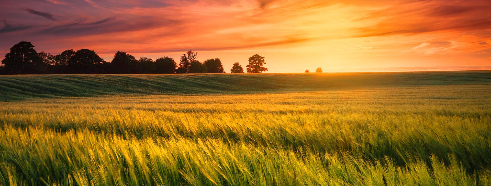 Środki ochrony roślin, nasiona i nawozy